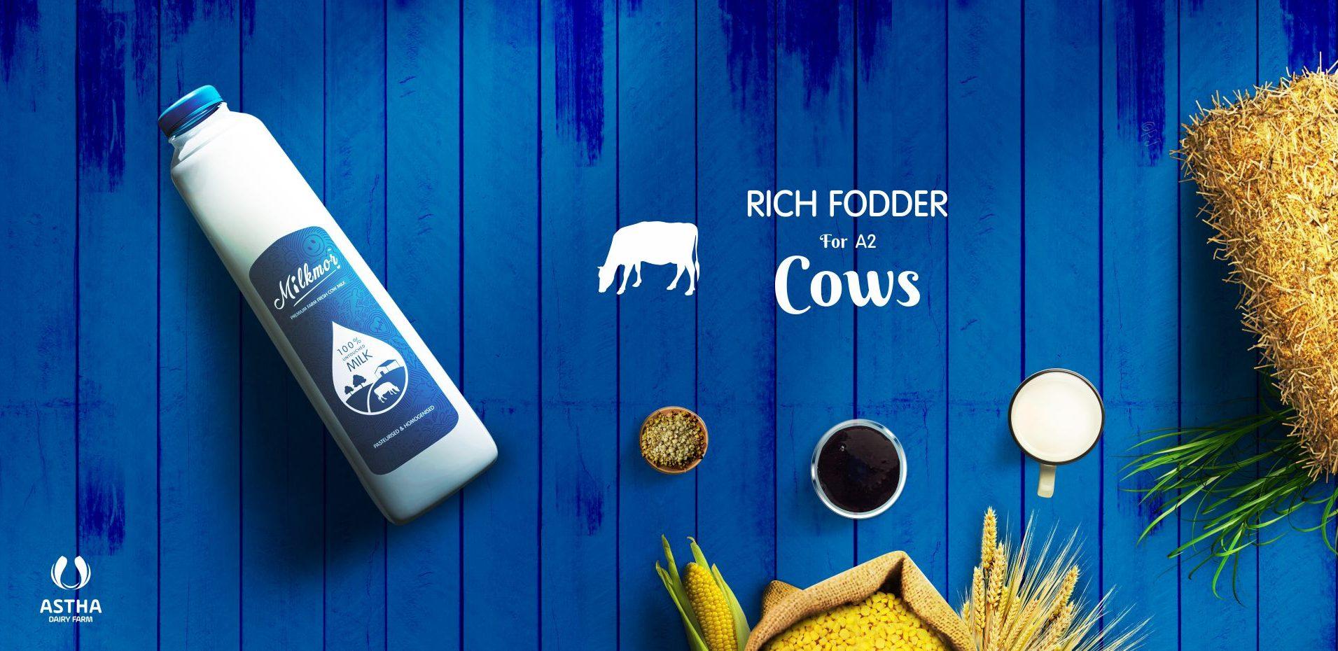 Milkmor_Pure_Cow_Milk_Ghee_Ahmedabad